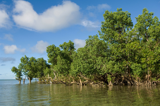 Mangrove forest in Madagascar