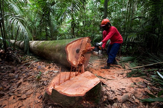 Daniel Beltra photograph of man chain sawing a tree