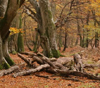 picture of ancient woodland