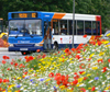 picture of wildlflowers and bus