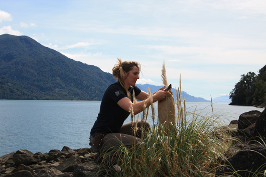 collecting specimens from pampas grass
