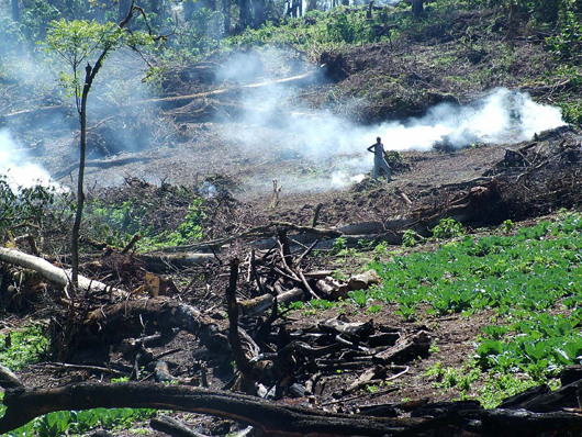 Forest being burnt for agriculture