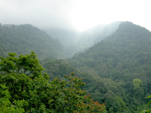 view over misty forest