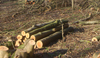 logs on floor of woodland