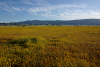 California wildflowers small