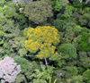 picture of dense rainforest