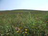 remnant and reconstruction 2